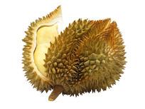 成熟开裂的榴莲露出金黄色果肉