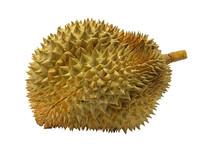 金黄色的榴莲抠图白背景摄影图