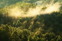 绿色树林晨雾升腾