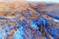 茂密树林雪景(航拍)
