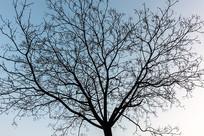 天空下大树的剪影
