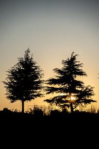 夕阳下的树木剪影