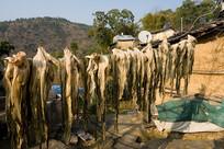 中国中西部农村农户晾晒腌菜
