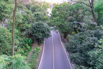 森林里的一条公路