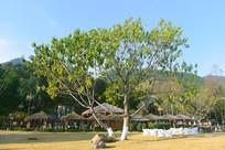 西昌邛海畔的凉亭和阳光茶座