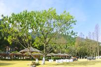 西昌邛海畔的茅亭和阳光茶座