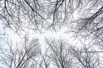 天空下的树枝