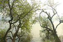 西昌邛海及湖岸树木