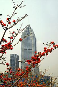 深圳城市建筑和木棉花