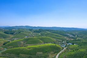 鸟瞰普洱茶场