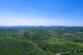 鸟瞰普洱茶田园