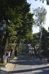 沙面街道绿化景观