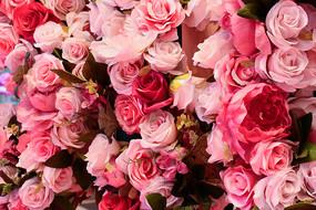玫瑰花背景