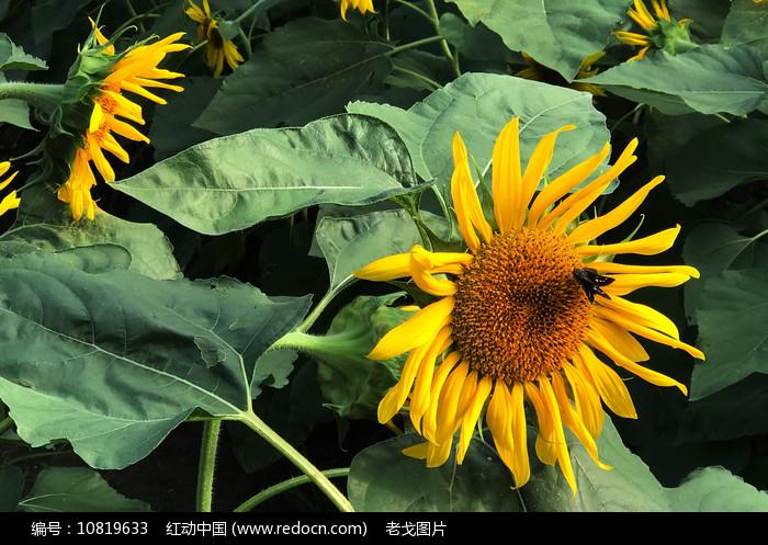 蜂花恋图片