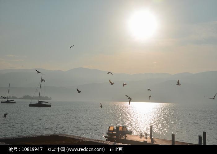 西昌邛海日出和海鸥 图片