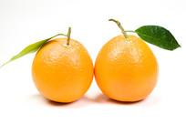 重庆巫山曲尺脐橙纽荷尔白背景