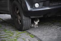 车下取暖的小猫