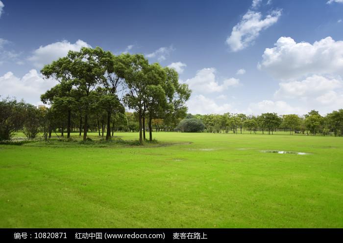 绿树草地图片
