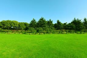 公园青草地