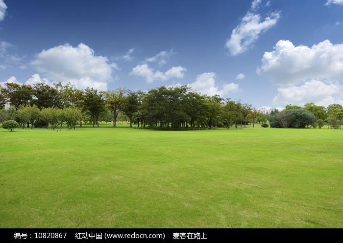 绿树与草地图片