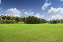 绿树与草地
