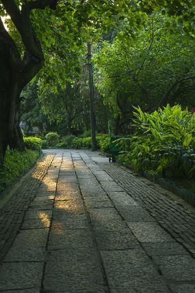 阳光洒进林荫路