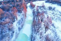 冰河红树林