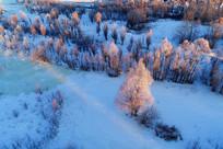 大兴安岭冬季雪原树木晨光