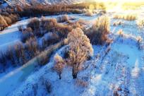 航拍暖阳冰河树林
