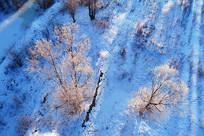航拍雪原之树
