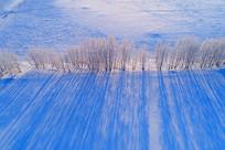 航拍原野冬季农田防护林雪景
