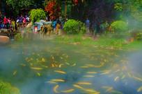 鱼塘与鱼塘里转圈游动的鱼