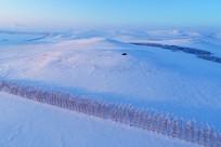 雪原农田防护林风景(航拍)