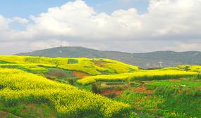 春天油菜花开的田野