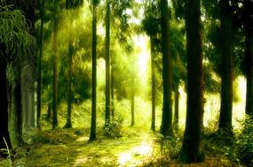 阳光穿过邛崃天台山原始森林