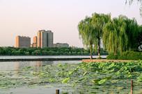 大明湖风光