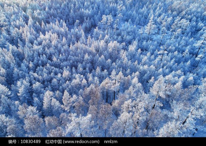 大兴安岭冬季雪域雾凇(航拍) 图片