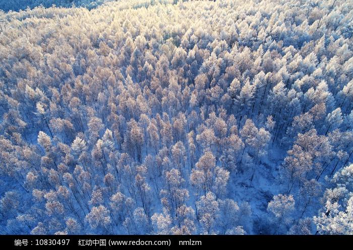 大兴安岭冬季原生态雪林风光图片