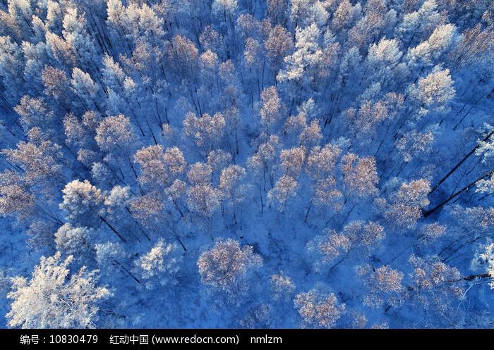 大兴安岭树林雾凇 图片