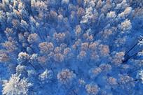 大兴安岭树林雾凇