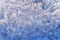 大兴安岭银色森林航拍