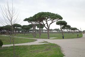 古丽尔米别墅公园树林