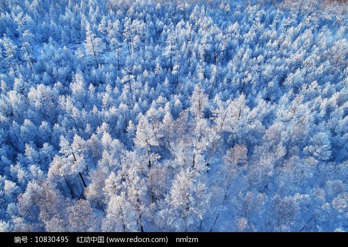 航拍大兴安岭树林雾凇 图片