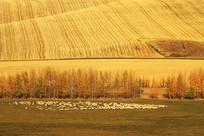 呼伦贝尔田间风景