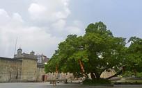 深圳鹤湖新居-禾坪及大榕树