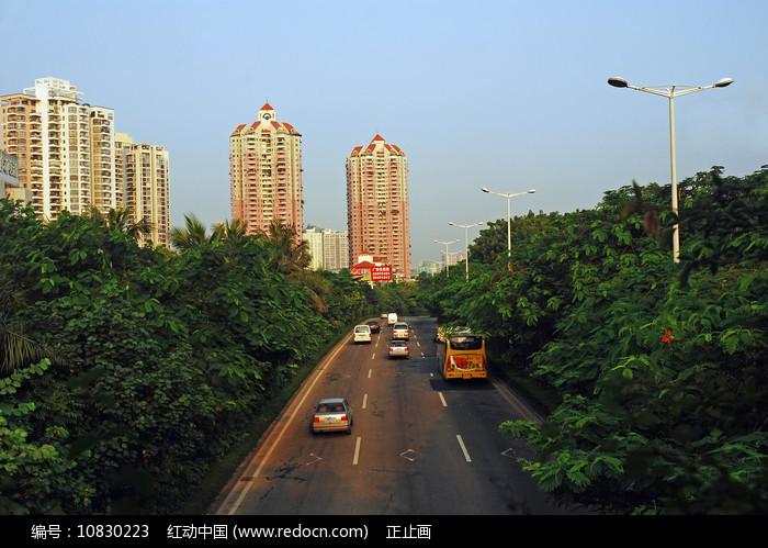 深圳深南大道道路绿化 图片