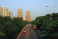 深圳深南大道道路绿化