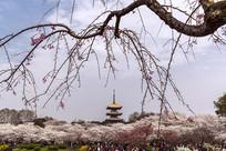 武汉樱花园