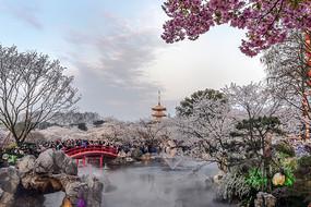 东湖樱花园暮色