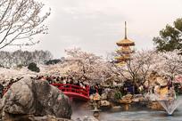 东湖樱花园夜景